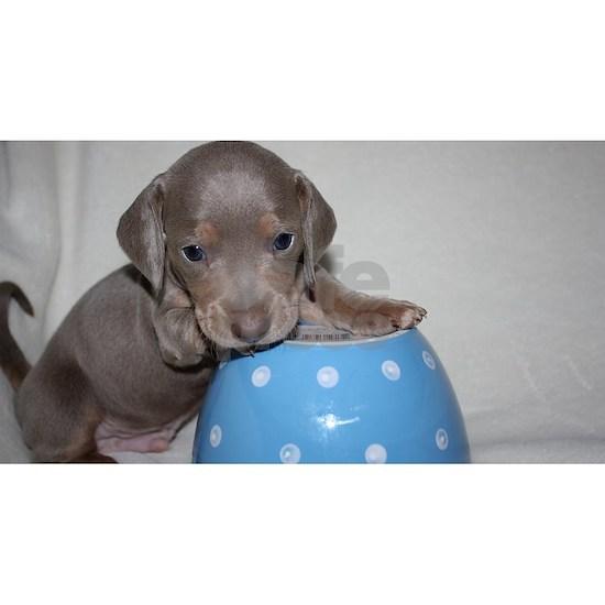 1312131803-dachshund-number-167-IMG_2791