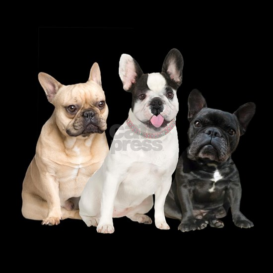 Three French Bulldogs