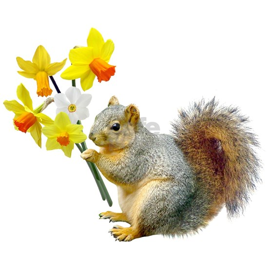 Squirrel Daffodils