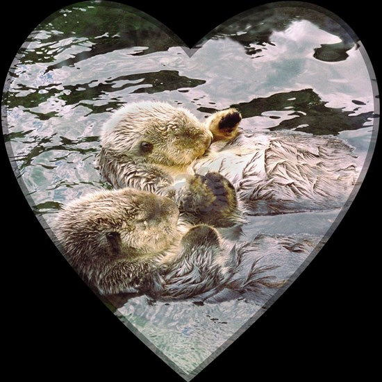 (16)Sea Otters Holding Hands