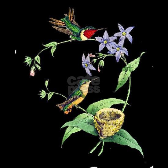Hummingbirds - Chaetocercus Rosae
