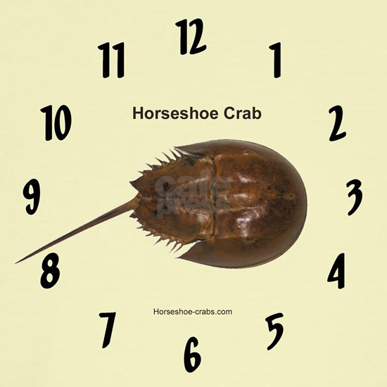 Horseshoe crab clock