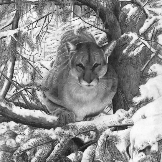 Cougar Design