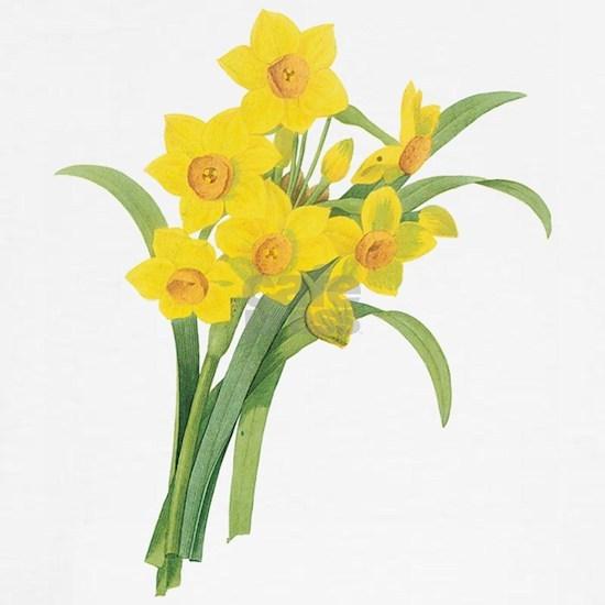 Vintage Narcissus