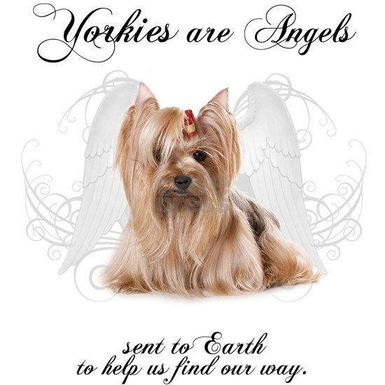 Angel Yorkie