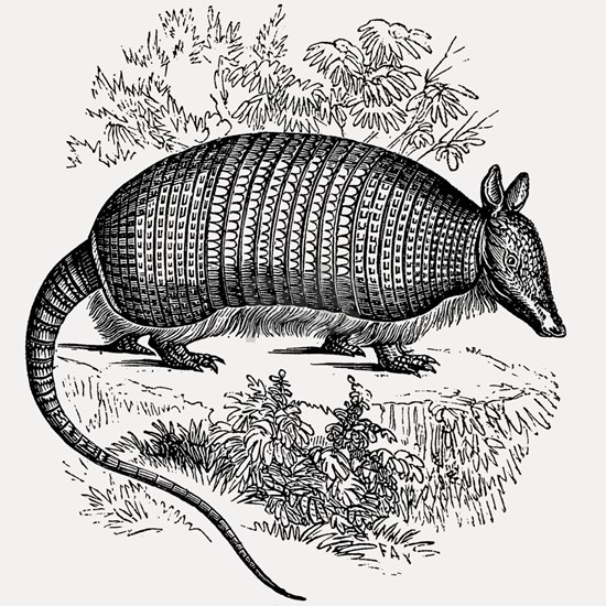 Vintage Armadillo Black White Retro Illustration
