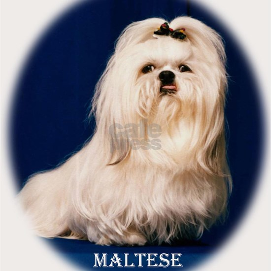 maltese shirts and totes