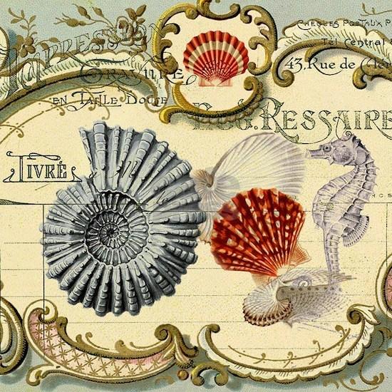 modern beach seashells seahorse