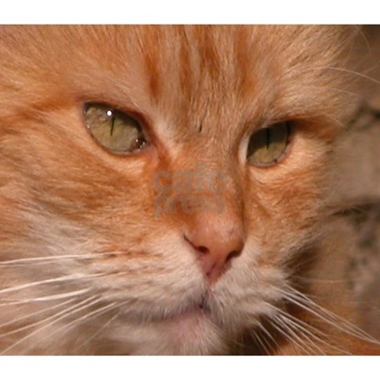 Gorgeous Orange Kitty