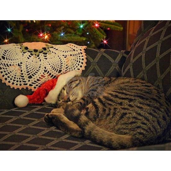 Santa Daisy the Christmas kitty cat