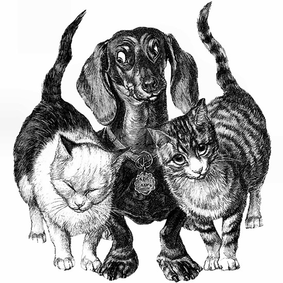 dachshund with cats sq