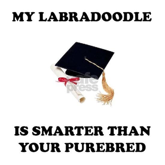 labradoodle-smarter-purebred