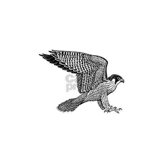 falcon-black
