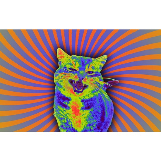 Psychedelic Kitty