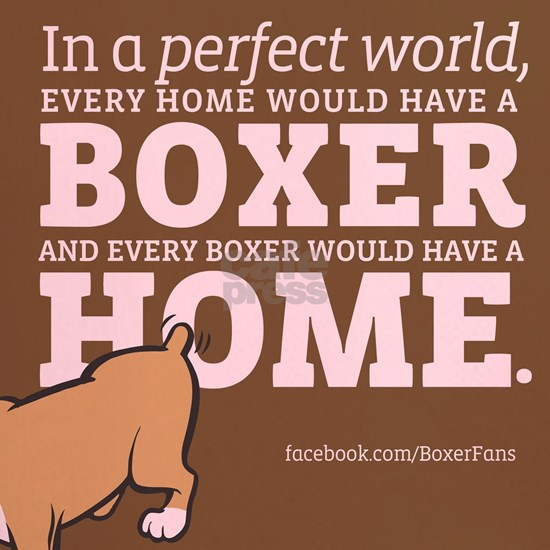 A Home for Every Boxer