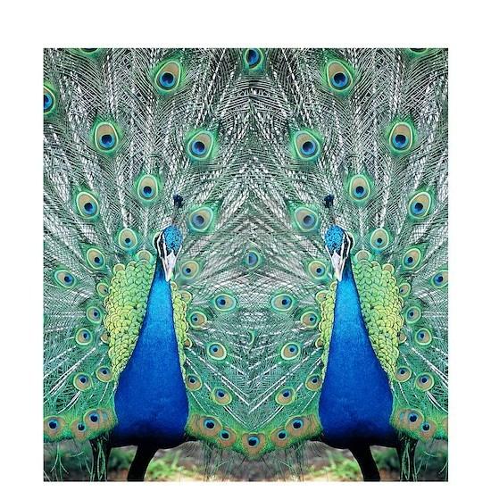 peacockflips