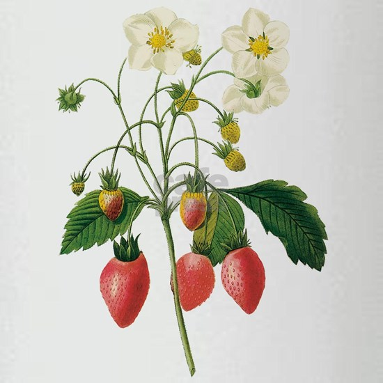 Vintage Strawberries by Redoute