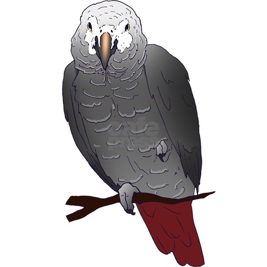 Timneh African Grey Parrot Perching on a Branch de