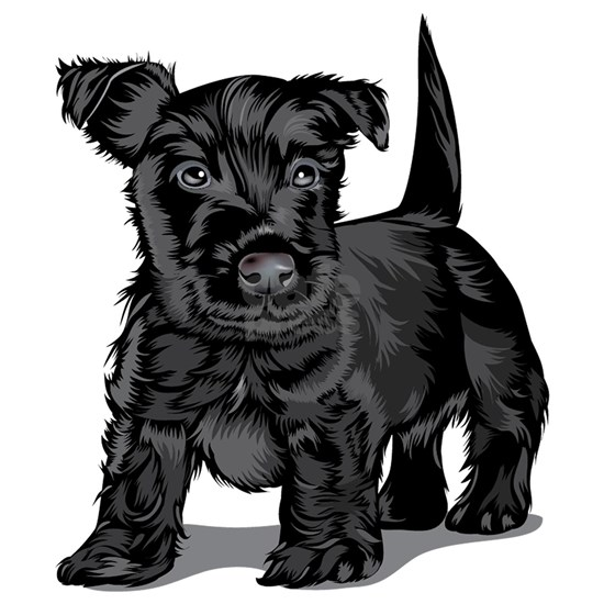 Cute Schnoodle dog