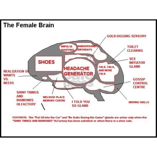 Neurology The Female Brain