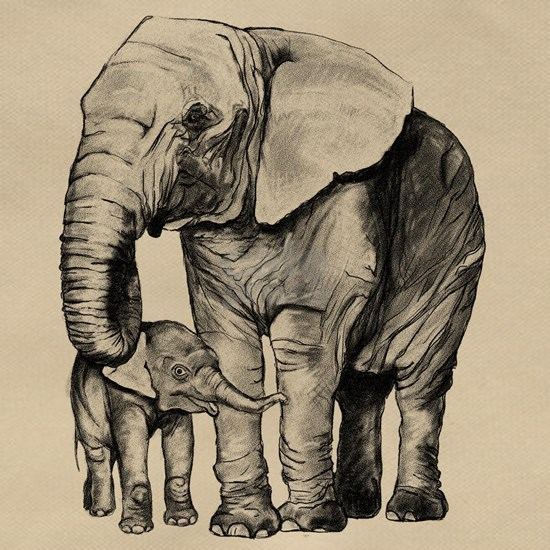 Drawn Elephant