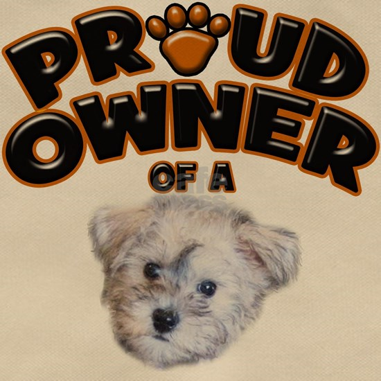 Proud Owner of a Schnoodle