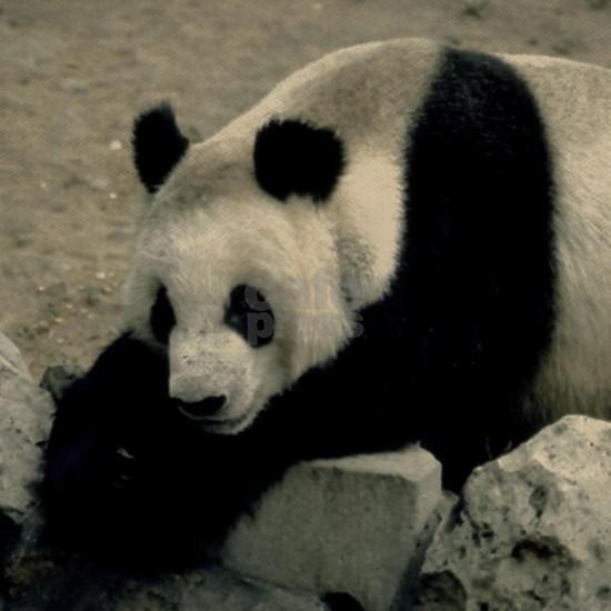 Panda Bear on rocks