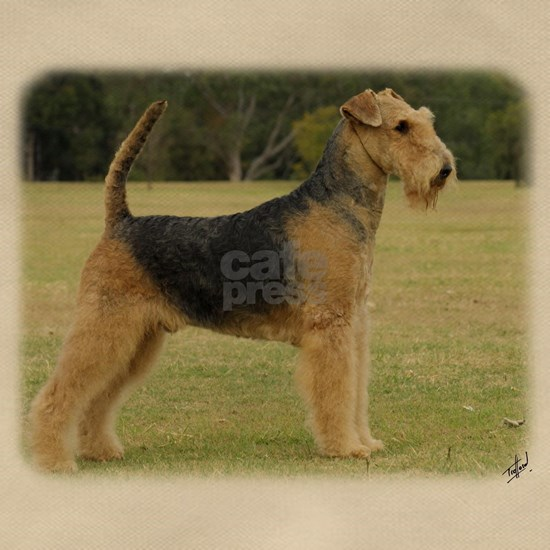 Airedale Terrier 9P011D-027