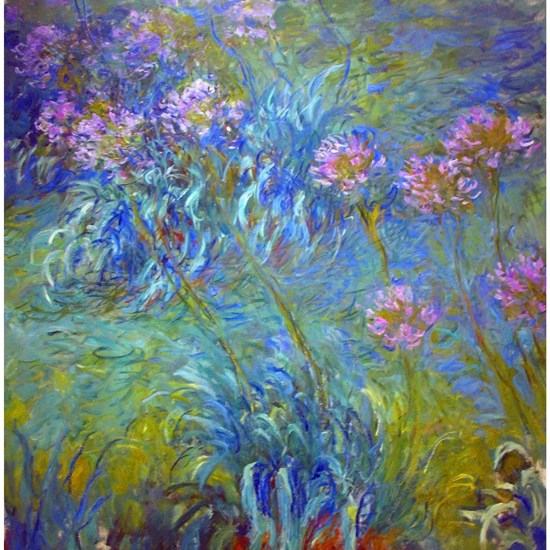 Agapanthus Monet Fine Art
