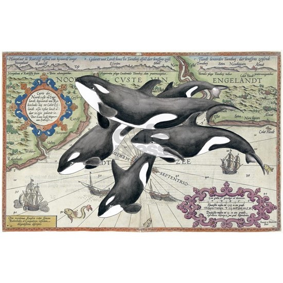 Orca Family Vintage Map
