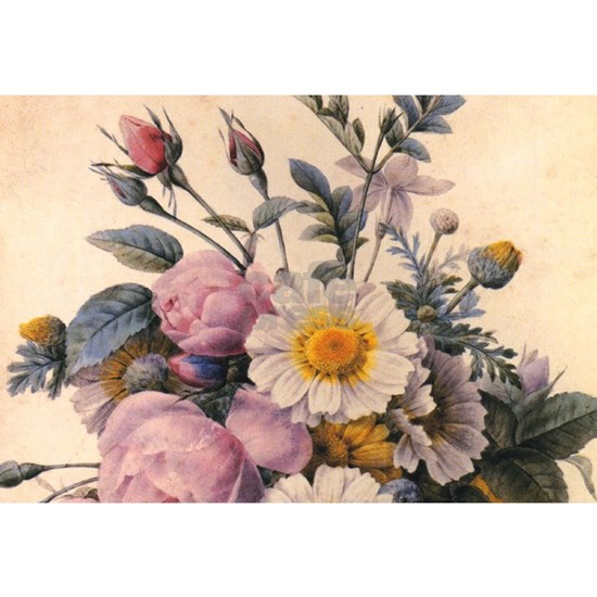 vintage botanical art, Redoute daisy and rose