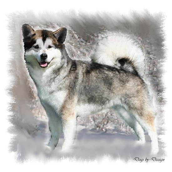alaskan malamute in snow 4