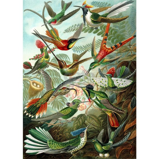 1899 Hummingbirds Art Forms of Nature Print