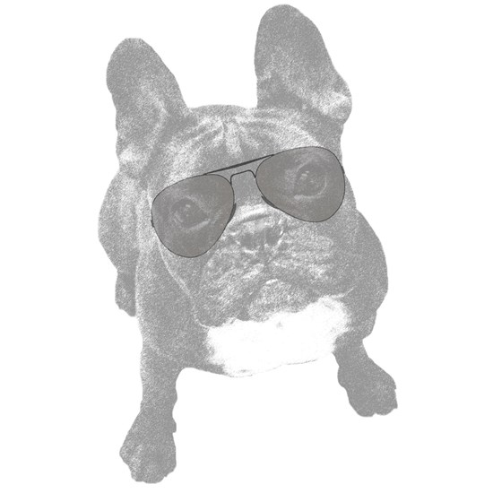 Aviator Frenchie