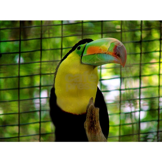 Keel-Billed Toucan showing his beak off Puzzle by ...