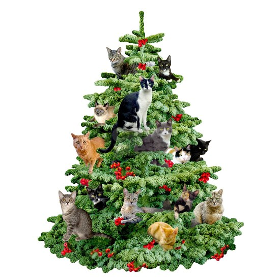 Cats in Tree