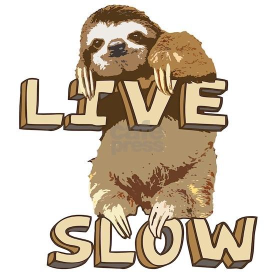 Funny Sloth - LIVE SLOW