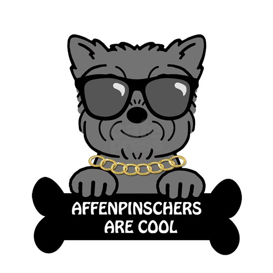 Affenpinschers are Cool