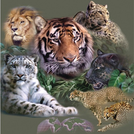ip001528catsbig cats3333