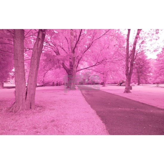Walk in the Park in Infrared