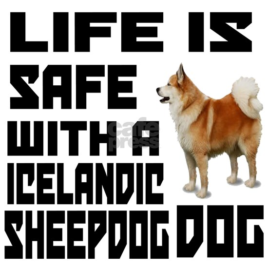 Life Is Safe With A Icelandic Sheepdog Dog