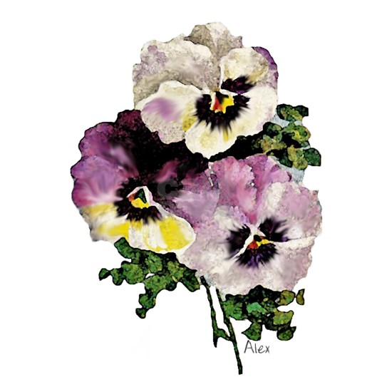 pansy water colourfinal signed3000 copy