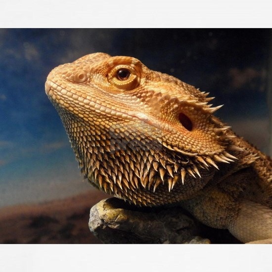 .young bearded dragon.