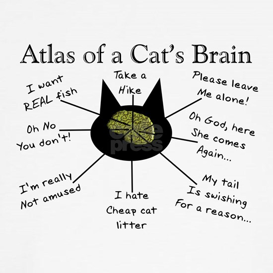 Atlas of a Cats Brain