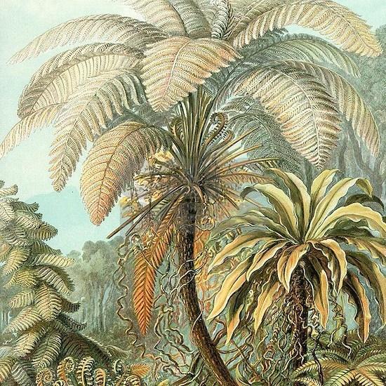 Vintage Tropical Palm