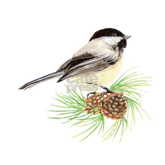 Chickadee Bird on Pine Branch