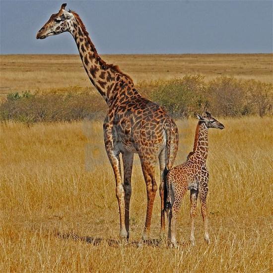 01 2006-0825 (450) Kenya - Masai Mara 9x11.5