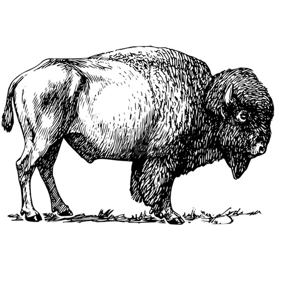 Buffalo/Bison Shirt