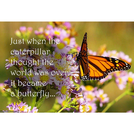 Butterfly Proverb