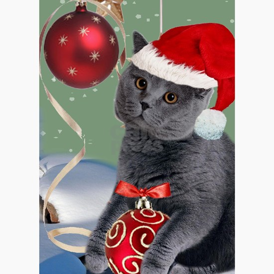 Gray cat Christmas Cards